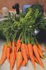 End_o_Carrots
