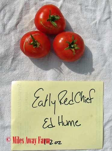 Early Red Chief Trial 2015