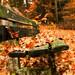 Autumn bench by Waldemar Wiera