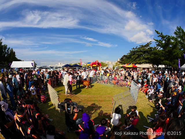 第2回大石公園ひまわり祭り2015-144