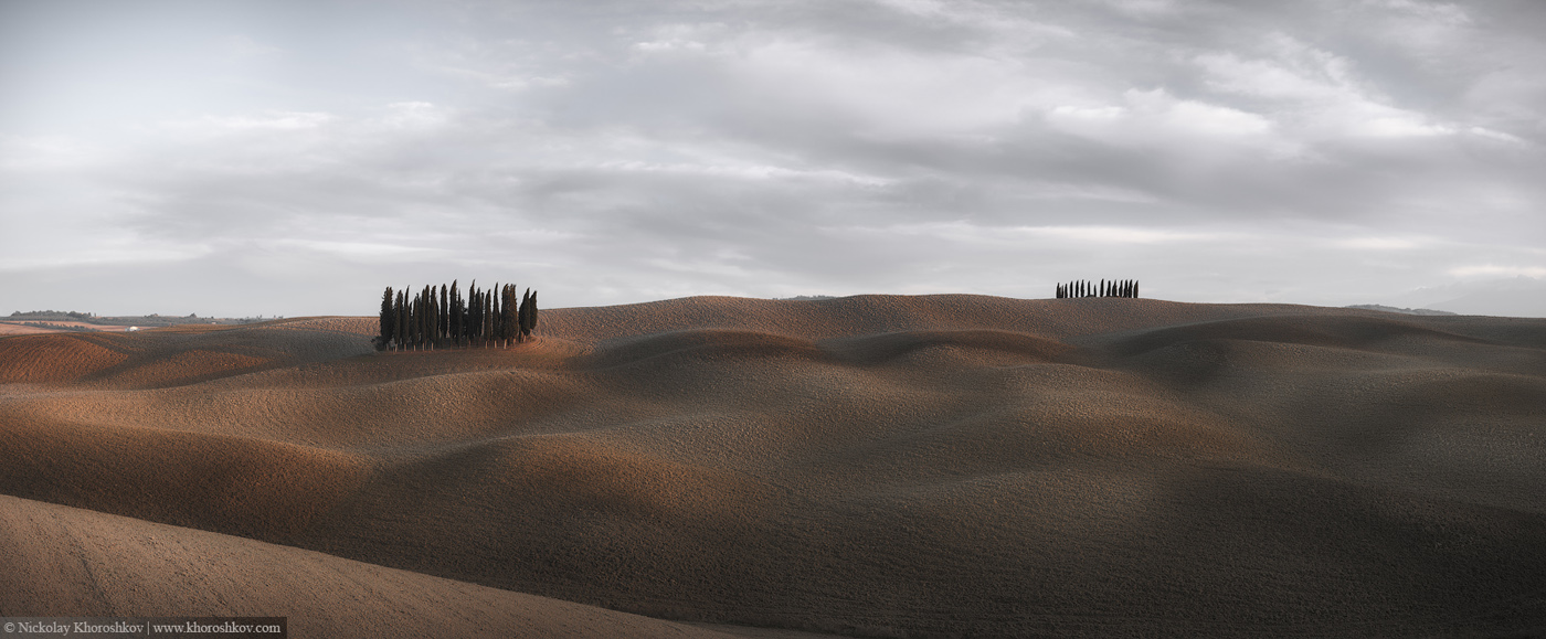Panorama of cypress grove at the field