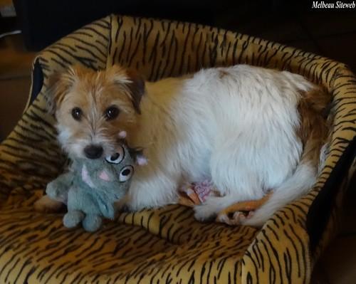 Helwen la petite chienne, l'écureuil & le celendrier de l'avent