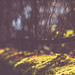 Timeless (HFF) by der_peste (on/off)