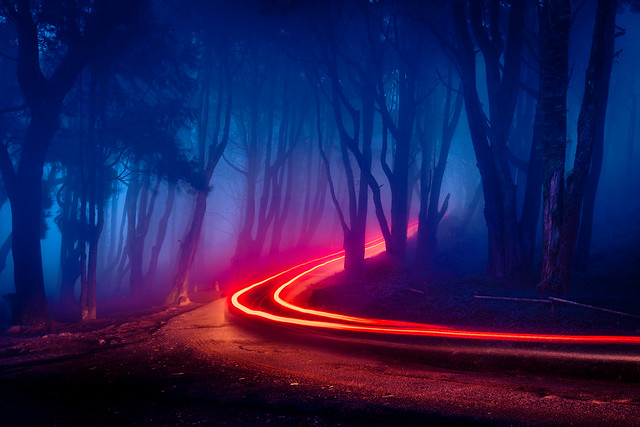 Neon Forest