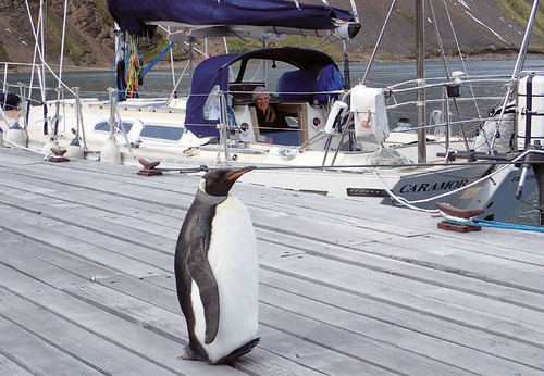 Minister-for-Penguin-Affairs-meets-Caramor-at-the-Tijuca-Jetty-in-Grytviken2