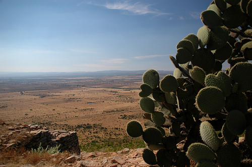 Prickly cactus survive in the arid land around La Quemada, Meso-American ruins near Guadalajara, Mexico