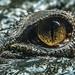 Eye of Mordor by Tamas Hodos Photography