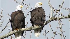Riverbend Eagles