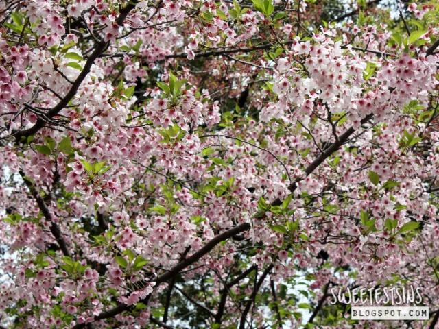 japan tokyo trip ueno park 20