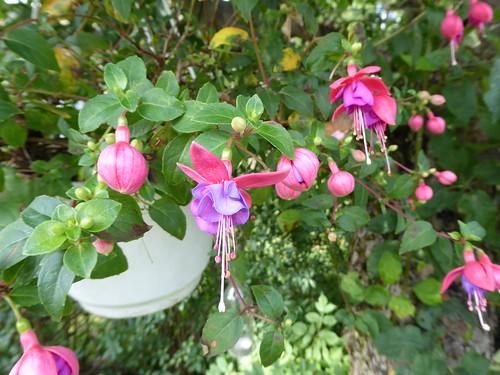 Bilder aus meinem Sommergarten im August