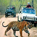 Ranthambore National Park Wildlife Tour Packages by tour_rajasthan