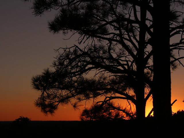 White Mountain Pine Tree Sunset