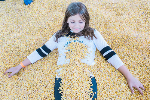 Buried in corn.