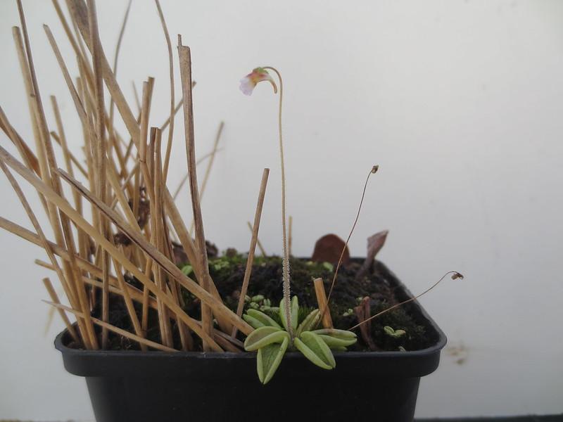 Plantas.werds.2012-2013 - Página 8 22751014074_c5bd3eb08a_c