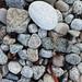 stones (dried seaweed)
