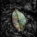 the leaf.