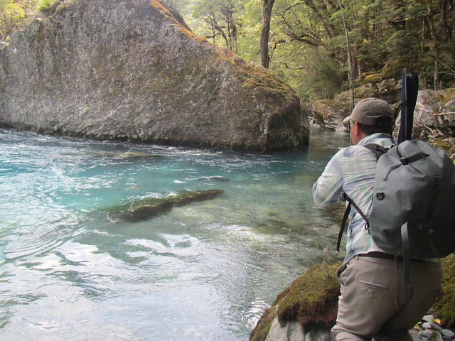 rainbow trout fishing in New Zealand