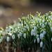 Frühling! by Pippilotta aus dem Tal