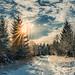 Winter by Sascha Wolf