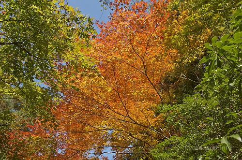 【写真】2014 紅葉 : 法然院/2018-10-19/IMGP7488