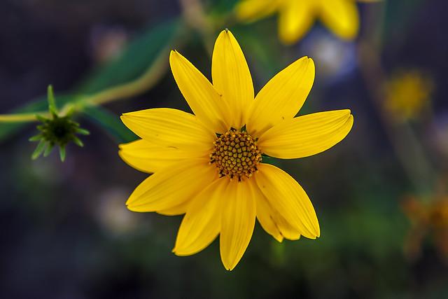 Wild Flower 7d1_2560