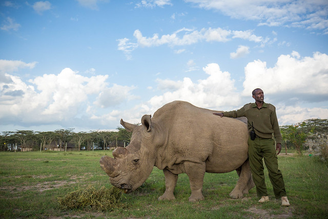 Sudan the rhino and his guard