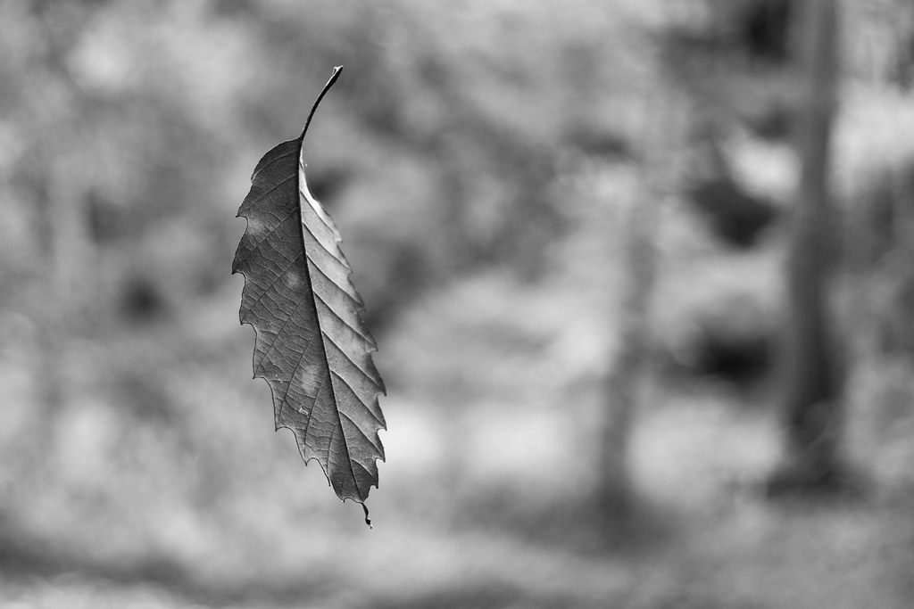 Suspended Leaf 3