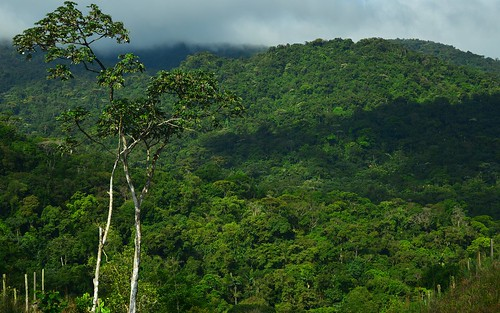 desktop forest landscape jungle panama centralhighlands featured santafé santafenationalpark chiriquidistrict