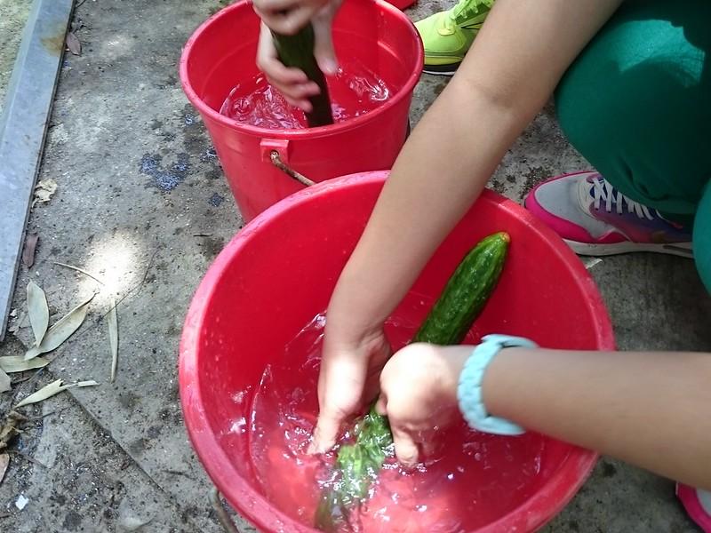 先洗「乾淨」的瓜菜