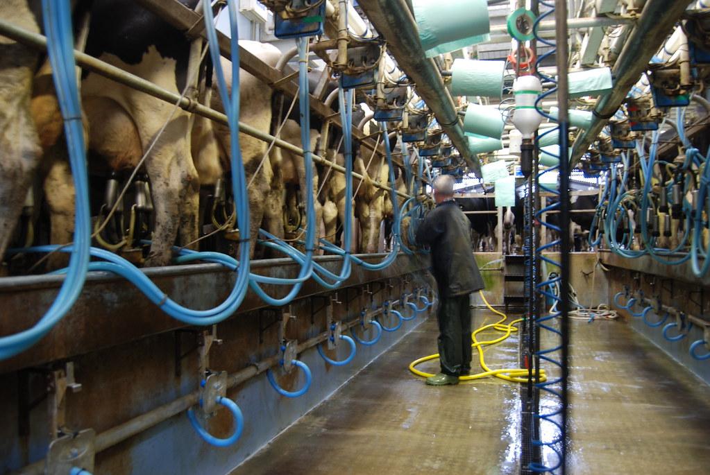 26 April 2012 - Daylesford Organic farm, Gloucestershire. (Photo credit: Martin Morrell)