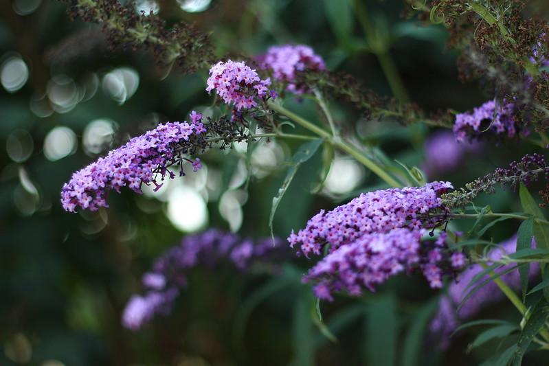 Gewächshaus und Blumeln 051gimp