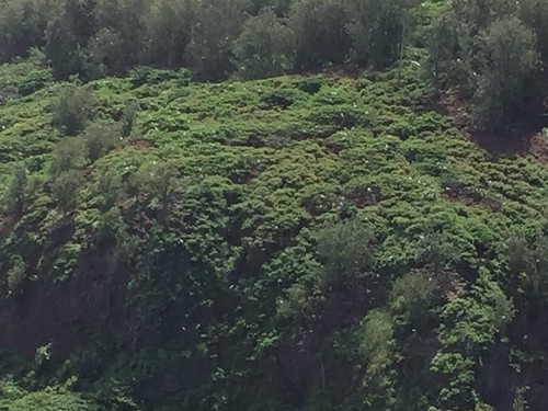 Kauai 2015 first few days