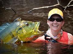 Mais um belo tucunare açú direto da Amazônia. A pescadora Regiane mandando bem a bordo do Kalua Barco Hotel.  #pescaamadora #pesqueesolte #baitcast #fly #pescaesportiva #sportfishing #fishing #flyfishing #fish #bassfishing #bass #angler #anglerapproved #m