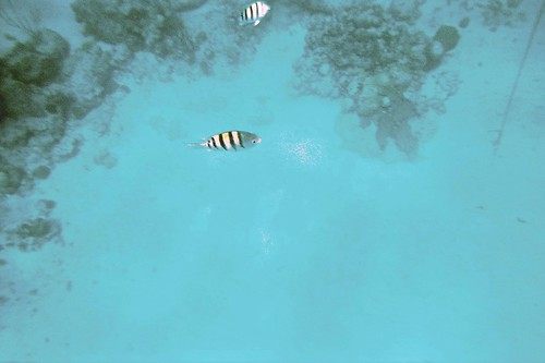 Snorkling #4