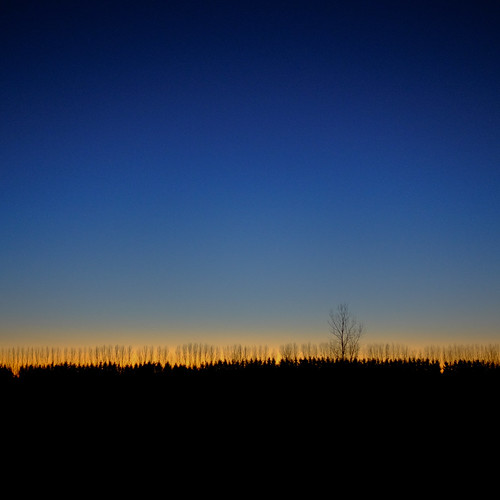 blue trees sunset silhouette square velvia bluehour sooc xt1 alfredday lensblr photographersontumblr xf23mmf14r 365the2015edition fujifilmxt1 2152015 3652015 215in2015 28nov15 332day 332365image 161215on