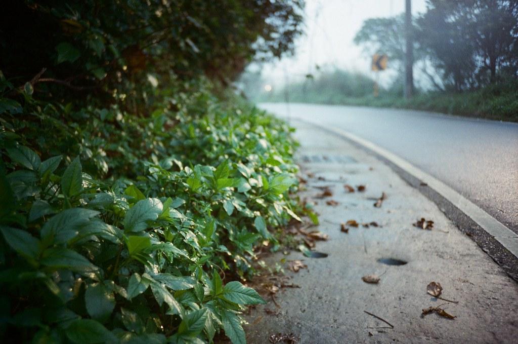 九份 Taipei / Portra 400 / Lomo LC-A+ 2015/11/14 從欽賢國中走下來的沿路,霧氣很重,葉子上面都濕漉漉的。  Lomo LC-A+ Kodak Pro Portra 400 3187-0026 Photo by Toomore
