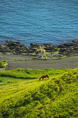 Horse at Velbastaður, Faroe Islands