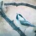 I Heard The Chickadee Sing by JJR1770