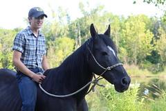 mane, mare, stallion, halter, bridle, horse, pasture,