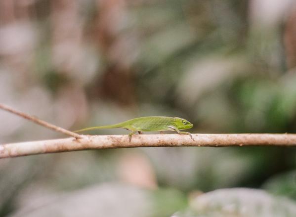 RYALE_Madagascar_Blog2_015
