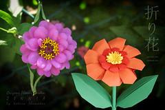 Origami Flower Garden. Zinnia. Oribana Charm collection