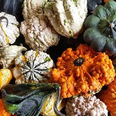 It's definitely fall! #fall #october #pumpkin #memphis #farmersmarket