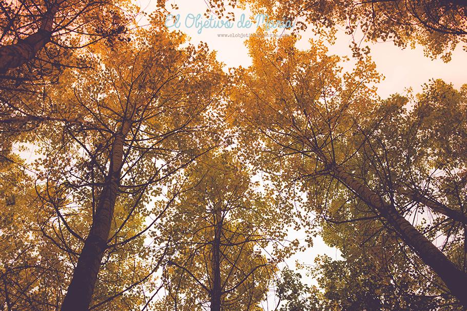 El otoño desde abajo