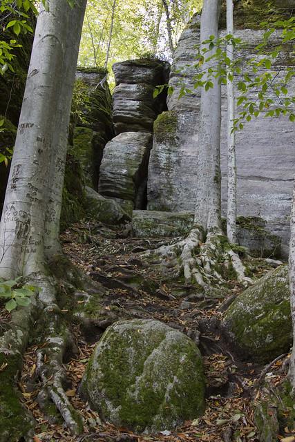 IMG_6778 Rocks and Beech
