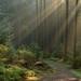 Awakening of a forest by Guido de Kleijn