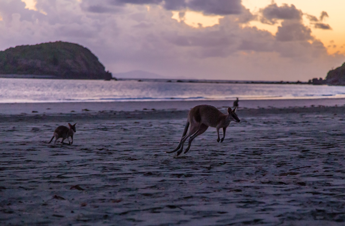 Cape Hillsborough-5489