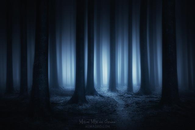 Perdido en la noche