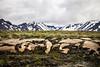 Extreme Iceland Landskape by agustago