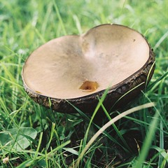 Mushroom - Photo of Soignolles