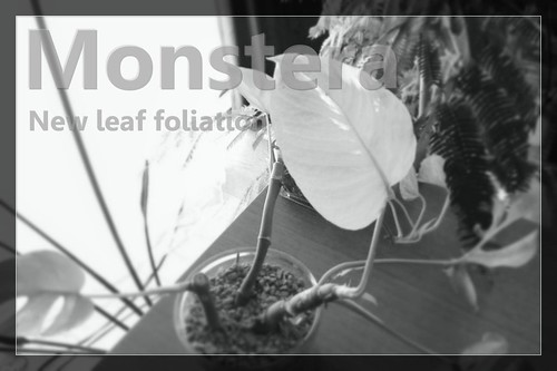 monstera_newlwaf2015_eye